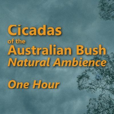 Cidadas Natural Ambience_One Hour