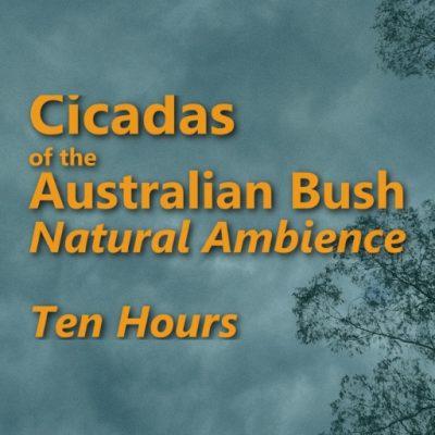 Cicadas Ambient Sounds_TenHours