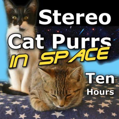 Cat Purrs Ten Hours